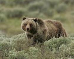 Colorado camper wakes to find bear biting head