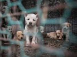 South Korea dogs saved from being turned into soup