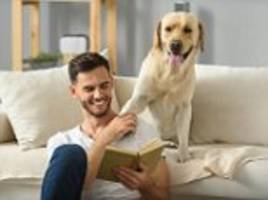 study pinpoints genetic marker that makes dogs social