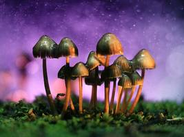 psychedelic drugs could tackle depression in a way that's distinct from antidepressants