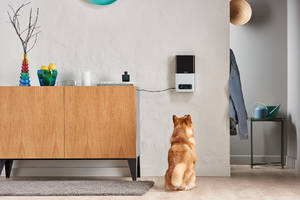 petcube's $249 treat cam goes on sale next week
