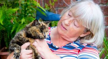Northern Ireland cat Sasha could be world's oldest at 31