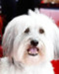 britain's got talent pudsey replaced with lookalike by ashleigh butler after shock death