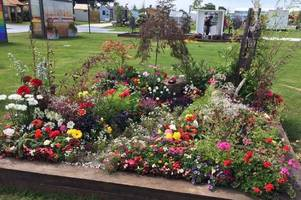 hull 4 heroes wins silver at rhs flower show for this eye-catching garden