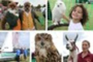 in pictures: all creatures great and small at 2017 kings bromley...