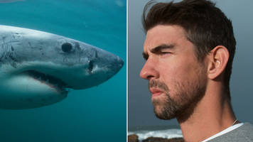 Michael Phelps loses 'race' to Great White shark