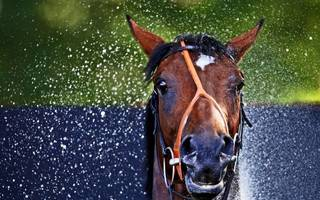 you're neigh getting away with it: businessman guilty in horsemeat plot