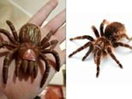 hampshire mother calls rspca to deal with toy tarantula