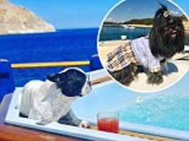 Rich Dogs of Instagram having a better holidays than you