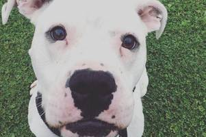 long-stay dog poncho gets own instagram account in hope of finding him a loving home