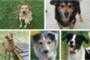 These 12 Essex dogs need a forever home and it could be at your...