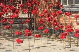 derby's weeping window poppies at the silk mill visited by 82,000 people in first two weeks
