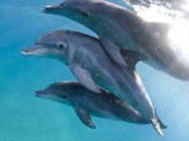 gay dolphins spotted off the coast of australia