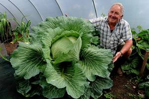 an amateur gardener has grown giant 'armchair-sized' vegetables that need to be carried on stretchers