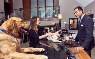 Hotel industry missing out on £324m a year from pet owners