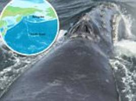 Scientists on research vessel spot whale in Bering Sea