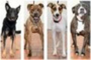 Can you help re-home these pets from the City Dogs' Home?