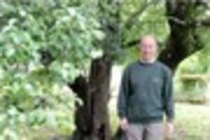 why this plymouth pear tree is one of the rarest in the world