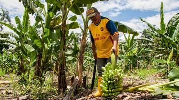 colombia: searching for an alternative to coca