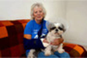 Dog and owner injured in unprovoked dog attack in Torquay park
