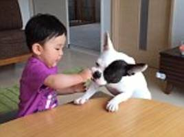 Baby boy in Japan unwillingly shares snack with family dog