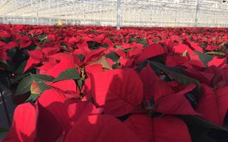 northern flowerhouse: private equity firm backs lincolnshire plant company