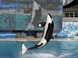 SeaWorld's 42-year-old killer whale is euthanized