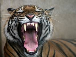 cisco once created a 'tiger team' to attack a hated rival (csco, anet)