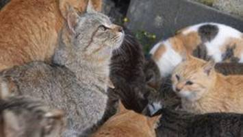 66 cats rescued from foreclosed pennsylvania home