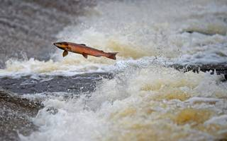 uk food and drink export figures rise to new high as british salmon soars