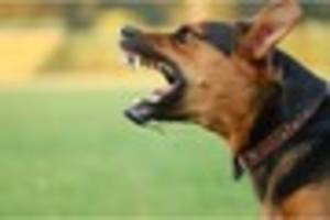 What to do if you or your dog is attacked by another dog