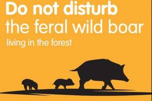 new posters put up to tell forest of dean visitors what to do if they meet a wild boar