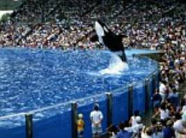 Former SeaWorld trainer lifts lid after three whales die
