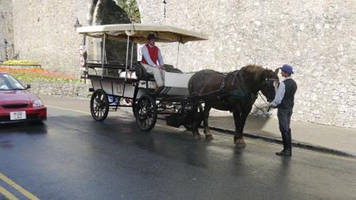 pembrokeshire council bid to licence horse-drawn carriages