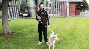 man in court after taking goat into northern ireland lidl store