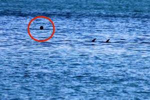 Man goes swimming with dolphins then finds himself in trouble