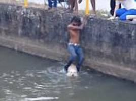man saves drowning dog from canal in malaysia