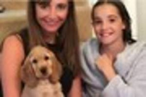 redhill family's pet puppy is 'stolen' while they are taking it...