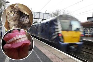 top ten list of strangest things left on scotrail trains: who forgets false teeth or kittens?