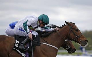 horse racing betting tips: judicial ready to shoot down beverley rivals