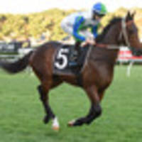 racing: surf's up for bullrush while pukekohe looks promising