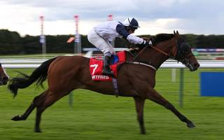 horse racing betting tips: confessional can blitz them all at haydock