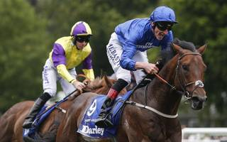 horse racing betting tips: the price is right for harry, even in the rain