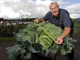 pensioner grows 5ft cabbage 50 times bigger than average