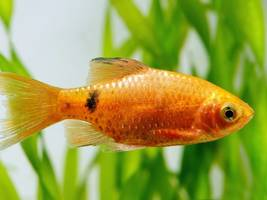 feeling lonely on an overnight trip? hire a goldfish