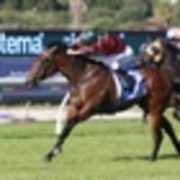 racing: colt's course locked in after danehill