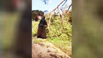 Video: Chainsaw-wielding nun takes Hurricane Irma cleanup into her own hands