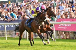 tommy taylor backed into second favourite for william hill ayr gold cup