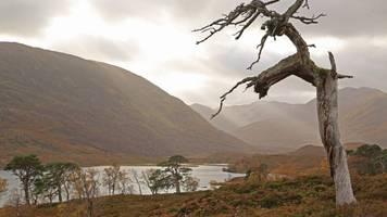 New planting at 'granny pine' sites in Highlands