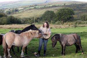 dartmoor pony burgers have gone on sale at a farmers' market